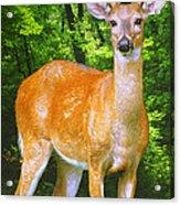 Young Whitetailed Deer Buck Digital Art Acrylic Print