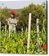 Young Woman Harvesting Red Peppers Acrylic Print