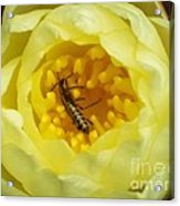 Your Bugg'in Me Acrylic Print