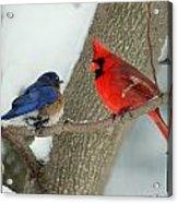 Your Nest Or Mine Acrylic Print