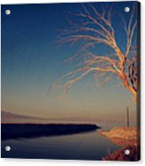 Your One And Only Acrylic Print by Laurie Search