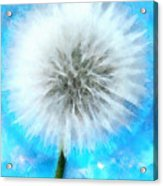 Youthful Wish Acrylic Print