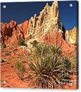 Yucca Badlands And Colors Acrylic Print