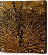 Yucca Gold Acrylic Print