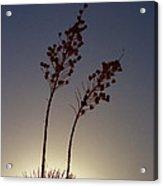 Yucca Sillhouette Acrylic Print