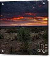 Yucca Sunset Acrylic Print
