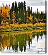 Yukon Autumn Acrylic Print