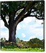 Yum Yum Tree Acrylic Print