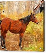 Yuma- Stunning Horse In Autumn Acrylic Print
