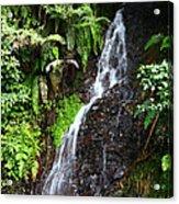 Yungas Waterfall Acrylic Print