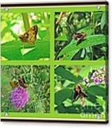Zabulon Skipper Butterfly - Poanes Zabulon Acrylic Print