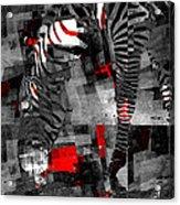 Zebra Art - 56a Acrylic Print