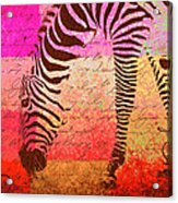 Zebra Art - T1cv2blinb Acrylic Print