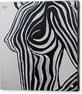 Zebra Body Paint Acrylic Print