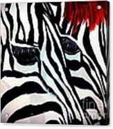 Zebra Couple Acrylic Print