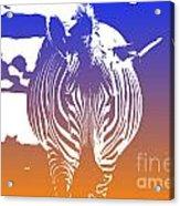 Zebra Crossing V6 Acrylic Print