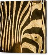 Zebra Eye Acrylic Print by Jennifer Burley
