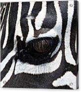 Zebra Eye Acrylic Print