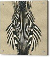Zebra Front Acrylic Print