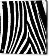 Zebra Hide Acrylic Print