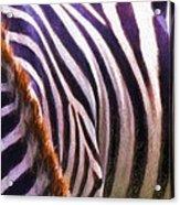 Zebra Lines Acrylic Print