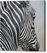 Zebra Look Acrylic Print