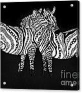 Zebra Love 1 Acrylic Print
