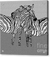 Zebra Love 12 Acrylic Print