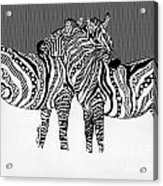 Zebra Love 14 Acrylic Print