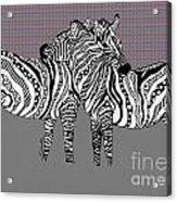 Zebra Love 25 Acrylic Print