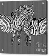 Zebra Love 26 Acrylic Print