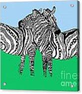 Zebra Love 6 Acrylic Print