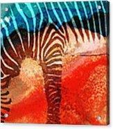 Zebra Love - Art By Sharon Cummings Acrylic Print by Sharon Cummings