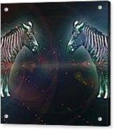 Zebra Nation Acrylic Print