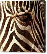 Zebra Patterns Acrylic Print