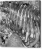 Zebra - Rainy Day Series Acrylic Print