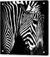Zebra Strips Acrylic Print