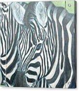 Zebra Triptych General Acrylic Print