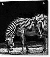 Zebra Unique Patterns Acrylic Print