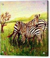 Zebras At Ngorongoro Crater Acrylic Print