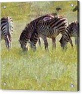 Zebras In Africa Acrylic Print