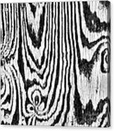 Zebras In Wood Acrylic Print