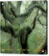 Zen Forest Acrylic Print
