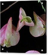 Zen Of Nature I Acrylic Print