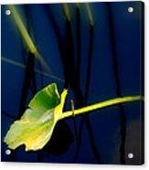 Zen Photography V Acrylic Print