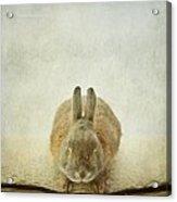 Zen Rabbit  Acrylic Print
