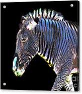 Zephyrus Zebra II Acrylic Print