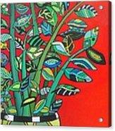 Zi Zi Plant II Acrylic Print