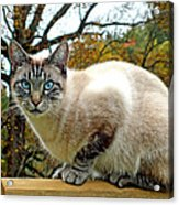 Zing The Cat In The Fall Acrylic Print