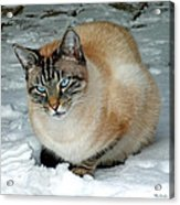 Zing The Cat On The Porch In The Snow 2 Acrylic Print